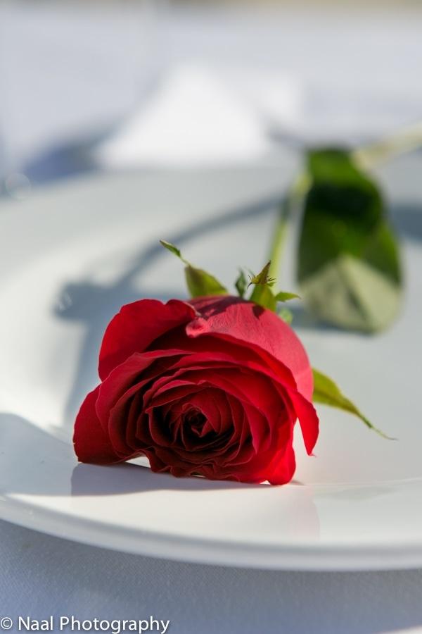 MARRIAGE PROPOSAL -  - NAAL wedding 3