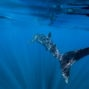 whale shark photographer